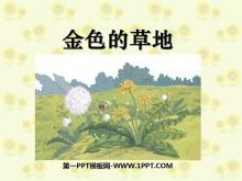 《金色的草地》PPT课件8