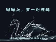 《湖滩上,有一对天鹅》PPT课件3