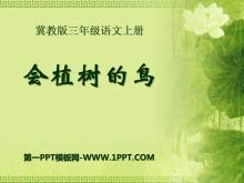 《会植树的鸟》PPT课件2