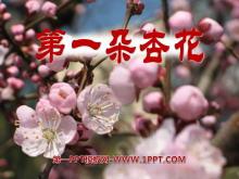 《第一朵杏花》PPT课件4