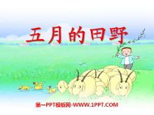 《五月的田野》PPT课件4