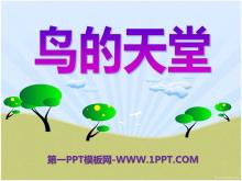 《鸟的天堂》PPT课件6