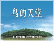 《鸟的天堂》PPT课件7