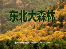 《东北大森林》PPT课件3