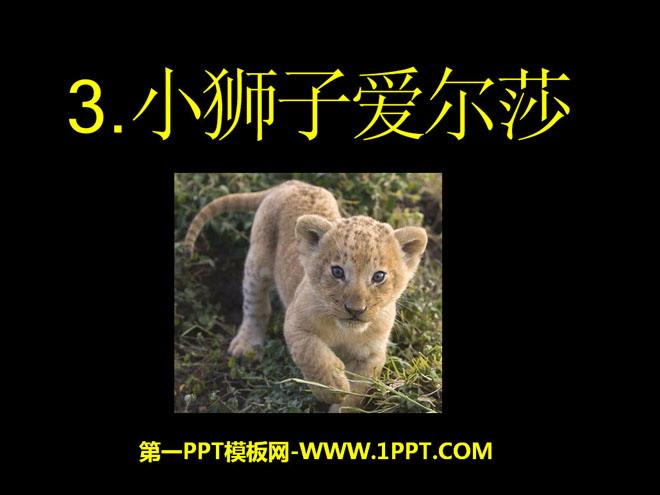《小狮子爱尔莎》PPT课件3