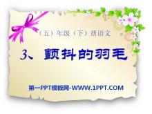 《颤抖的羽毛》PPT课件4