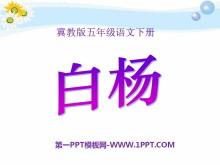 《白杨》PPT课件10