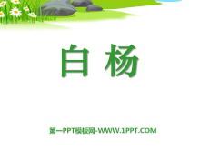 《白杨》PPT课件11