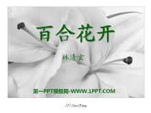 《百合花开》PPT课件