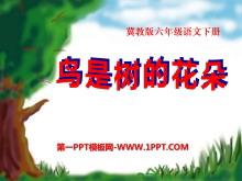 《鸟是树的花朵》PPT课件3
