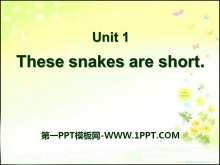 《These snakes are short》PPT课件2
