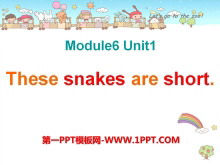 《These snakes are short》PPT课件5