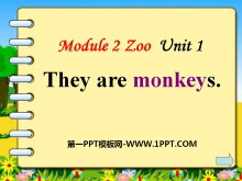 《They are monkeys》PPT课件4