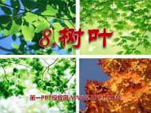 《树叶》PPT课件2