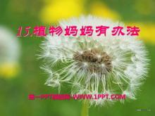 《植物妈妈有办法》PPT课件7
