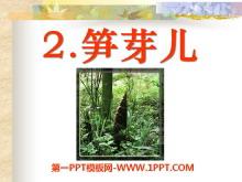 《笋芽儿》PPT课件10