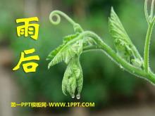《雨后》PPT课件14