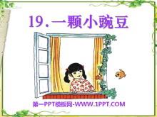 《一颗小豌豆》PPT课件5