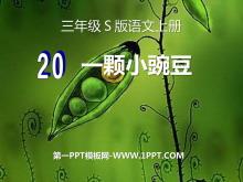 《一颗小豌豆》PPT课件7