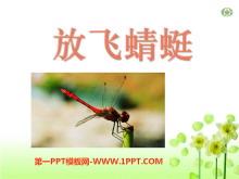 《放飞蜻蜓》PPT课件5