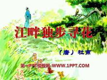 《江畔独步寻花》PPT课件7