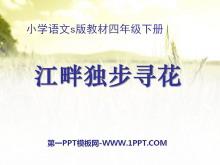 《江畔独步寻花》PPT课件8