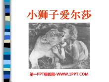 《小狮子爱尔莎》PPT课件5