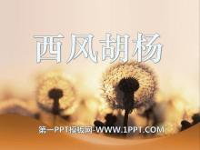 《西风胡杨》PPT课件3