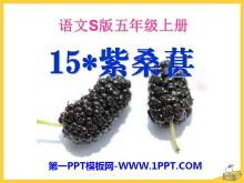 《紫桑葚》PPT课件2