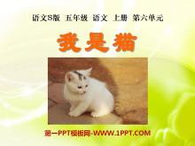 《我是猫》PPT课件4