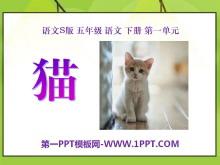 《猫》PPT课件6