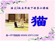 《猫》PPT课件7