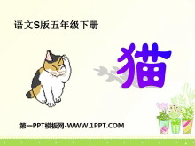 《猫》PPT课件8