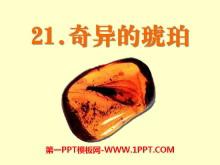 《奇异的琥珀》PPT课件5