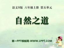 《自然之道》PPT课件9