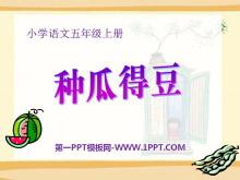 《种瓜得豆》PPT课件3