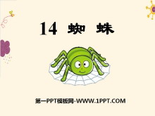 《蜘蛛》PPT�n件