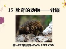《珍奇的动物――针鼹》PPT课件