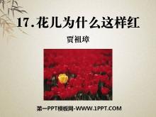 《花儿为什么这样红》PPT课件9