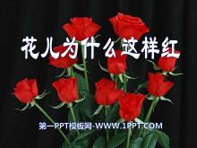 《花儿为什么这样红》PPT课件10