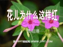 《花儿为什么这样红》PPT课件11