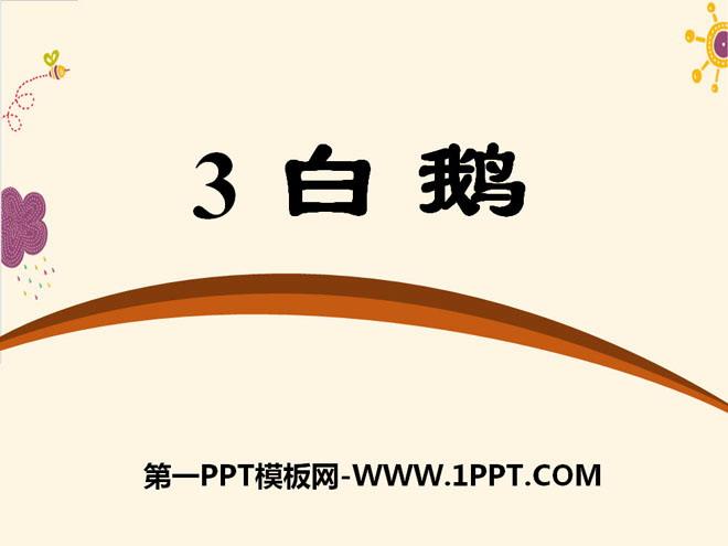 《白鹅》PPT课件10