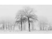 冬天的树木PPT背景图片