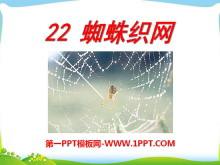 《蜘蛛织网》PPT课件2