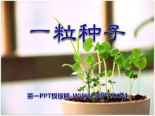《一粒种子》PPT课件4