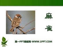 《麻雀》PPT课件6