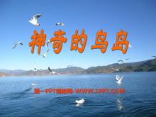 《神奇的鸟岛》PPT课件2