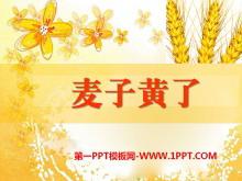 《麦子黄了》PPT课件2