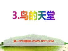 《鸟的天堂》PPT课件10