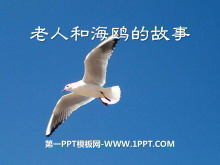 《老人和海鸥的故事》PPT课件